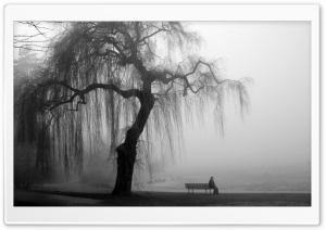 Willow Tree Black and White HD Wide Wallpaper for Widescreen