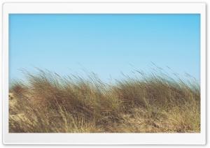 Wind on Field HD Wide Wallpaper for 4K UHD Widescreen desktop & smartphone
