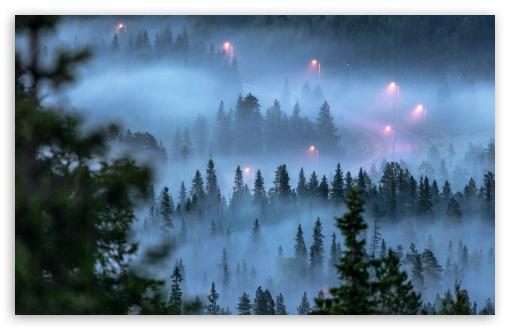 Download Winding Mountain Road, Fog, Coniferous Forest HD Wallpaper