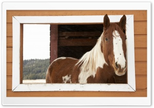 Window Watcher, Horse HD Wide Wallpaper for Widescreen