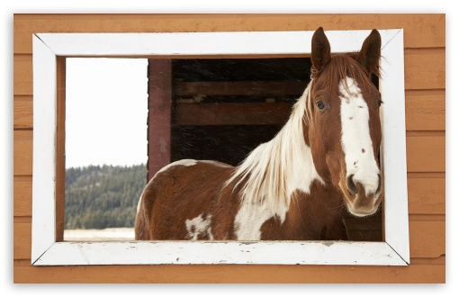 Window Watcher, Horse ❤ 4K UHD Wallpaper for Wide 16:10 5:3 Widescreen WHXGA WQXGA WUXGA WXGA WGA ; 4K UHD 16:9 Ultra High Definition 2160p 1440p 1080p 900p 720p ; Standard 4:3 5:4 3:2 Fullscreen UXGA XGA SVGA QSXGA SXGA DVGA HVGA HQVGA ( Apple PowerBook G4 iPhone 4 3G 3GS iPod Touch ) ; Tablet 1:1 ; iPad 1/2/Mini ; Mobile 4:3 5:3 3:2 16:9 5:4 - UXGA XGA SVGA WGA DVGA HVGA HQVGA ( Apple PowerBook G4 iPhone 4 3G 3GS iPod Touch ) 2160p 1440p 1080p 900p 720p QSXGA SXGA ;