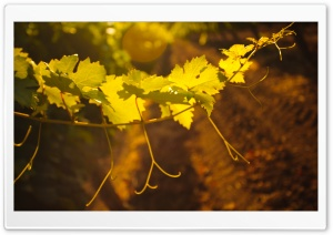 Wineries HD Wide Wallpaper for Widescreen