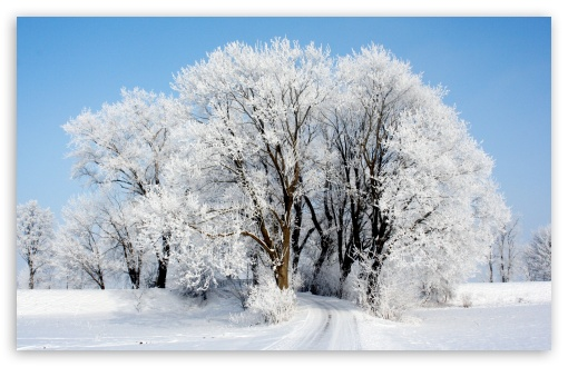 Winter HD wallpaper for Wide 16:10 5:3 Widescreen WHXGA WQXGA WUXGA WXGA WGA ; HD 16:9 High Definition WQHD QWXGA 1080p 900p 720p QHD nHD ; Standard 4:3 5:4 3:2 Fullscreen UXGA XGA SVGA QSXGA SXGA DVGA HVGA HQVGA devices ( Apple PowerBook G4 iPhone 4 3G 3GS iPod Touch ) ; Smartphone 5:3 WGA ; Tablet 1:1 ; iPad 1/2/Mini ; Mobile 4:3 5:3 3:2 16:9 5:4 - UXGA XGA SVGA WGA DVGA HVGA HQVGA devices ( Apple PowerBook G4 iPhone 4 3G 3GS iPod Touch ) WQHD QWXGA 1080p 900p 720p QHD nHD QSXGA SXGA ;