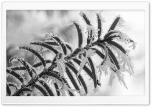 Winter Ultra HD Wallpaper for 4K UHD Widescreen desktop, tablet & smartphone