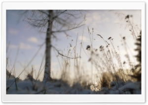 Winter Blur HD Wide Wallpaper for Widescreen