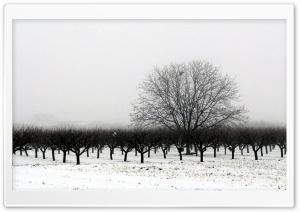 Winter BW HD Wide Wallpaper for Widescreen