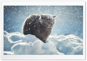 Winter Cat HD Wide Wallpaper for 4K UHD Widescreen desktop & smartphone