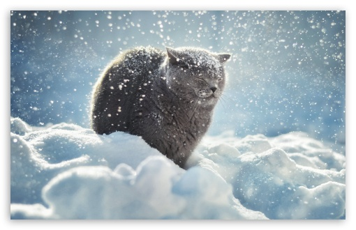 Winter Cat HD wallpaper for Wide 16:10 5:3 Widescreen WHXGA WQXGA WUXGA WXGA WGA ; HD 16:9 High Definition WQHD QWXGA 1080p 900p 720p QHD nHD ; Standard 4:3 5:4 3:2 Fullscreen UXGA XGA SVGA QSXGA SXGA DVGA HVGA HQVGA devices ( Apple PowerBook G4 iPhone 4 3G 3GS iPod Touch ) ; Smartphone 3:2 DVGA HVGA HQVGA devices ( Apple PowerBook G4 iPhone 4 3G 3GS iPod Touch ) ; Tablet 1:1 ; iPad 1/2/Mini ; Mobile 4:3 5:3 3:2 16:9 5:4 - UXGA XGA SVGA WGA DVGA HVGA HQVGA devices ( Apple PowerBook G4 iPhone 4 3G 3GS iPod Touch ) WQHD QWXGA 1080p 900p 720p QHD nHD QSXGA SXGA ;