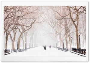 Winter, Central Park, New York City HD Wide Wallpaper for 4K UHD Widescreen desktop & smartphone