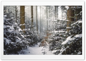 Winter, Coniferous Forest, Path, Snow Ultra HD Wallpaper for 4K UHD Widescreen desktop, tablet & smartphone
