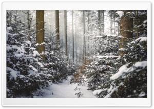 Winter, Coniferous Forest, Path, Snow Ultra HD Wallpaper for 4K UHD Widescreen desktop, tablet & smartphone