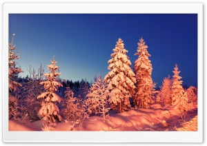 Winter Evening HD Wide Wallpaper for Widescreen