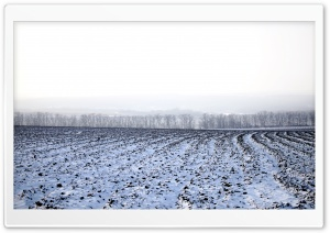 Winter Field HD Wide Wallpaper for Widescreen
