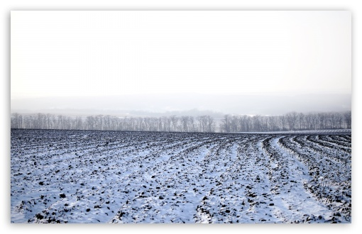 Winter Field HD wallpaper for Wide 16:10 5:3 Widescreen WHXGA WQXGA WUXGA WXGA WGA ; HD 16:9 High Definition WQHD QWXGA 1080p 900p 720p QHD nHD ; Standard 4:3 5:4 3:2 Fullscreen UXGA XGA SVGA QSXGA SXGA DVGA HVGA HQVGA devices ( Apple PowerBook G4 iPhone 4 3G 3GS iPod Touch ) ; Tablet 1:1 ; iPad 1/2/Mini ; Mobile 4:3 5:3 3:2 16:9 5:4 - UXGA XGA SVGA WGA DVGA HVGA HQVGA devices ( Apple PowerBook G4 iPhone 4 3G 3GS iPod Touch ) WQHD QWXGA 1080p 900p 720p QHD nHD QSXGA SXGA ; Dual 16:10 5:3 16:9 4:3 5:4 WHXGA WQXGA WUXGA WXGA WGA WQHD QWXGA 1080p 900p 720p QHD nHD UXGA XGA SVGA QSXGA SXGA ;