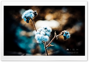 Winter Flowers HD Wide Wallpaper for Widescreen