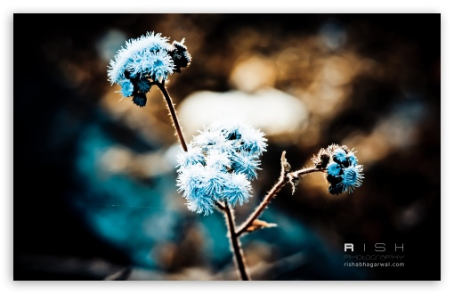 Winter Flowers HD wallpaper for Wide 16:10 5:3 Widescreen WHXGA WQXGA WUXGA WXGA WGA ; HD 16:9 High Definition WQHD QWXGA 1080p 900p 720p QHD nHD ; Standard 4:3 5:4 3:2 Fullscreen UXGA XGA SVGA QSXGA SXGA DVGA HVGA HQVGA devices ( Apple PowerBook G4 iPhone 4 3G 3GS iPod Touch ) ; iPad 1/2/Mini ; Mobile 4:3 5:3 3:2 16:9 5:4 - UXGA XGA SVGA WGA DVGA HVGA HQVGA devices ( Apple PowerBook G4 iPhone 4 3G 3GS iPod Touch ) WQHD QWXGA 1080p 900p 720p QHD nHD QSXGA SXGA ;