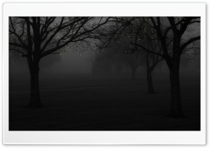 Winter Fog Light Christmas HD Wide Wallpaper for Widescreen