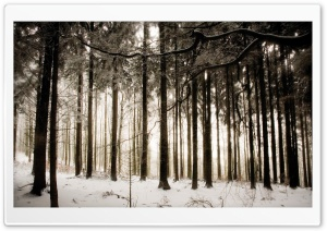 Winter Forest HD Wide Wallpaper for Widescreen