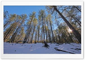 Winter Forest HD Wide Wallpaper for 4K UHD Widescreen desktop & smartphone