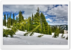Winter Forest Broken Trees HD Wide Wallpaper for Widescreen