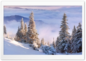 Winter Forest On Slope HD Wide Wallpaper for 4K UHD Widescreen desktop & smartphone