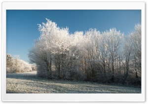 Winter Frost HD Wide Wallpaper for 4K UHD Widescreen desktop & smartphone