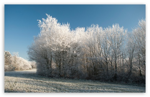 Winter Frost ❤ 4K UHD Wallpaper for Wide 16:10 5:3 Widescreen WHXGA WQXGA WUXGA WXGA WGA ; 4K UHD 16:9 Ultra High Definition 2160p 1440p 1080p 900p 720p ; Standard 4:3 5:4 3:2 Fullscreen UXGA XGA SVGA QSXGA SXGA DVGA HVGA HQVGA ( Apple PowerBook G4 iPhone 4 3G 3GS iPod Touch ) ; Tablet 1:1 ; iPad 1/2/Mini ; Mobile 4:3 5:3 3:2 16:9 5:4 - UXGA XGA SVGA WGA DVGA HVGA HQVGA ( Apple PowerBook G4 iPhone 4 3G 3GS iPod Touch ) 2160p 1440p 1080p 900p 720p QSXGA SXGA ;