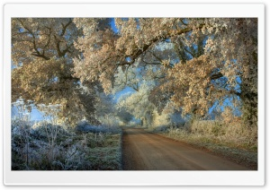 Winter Frost HD Wide Wallpaper for Widescreen