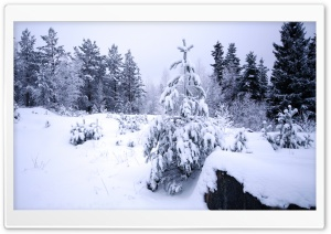 Winter In The Forest HD Wide Wallpaper for 4K UHD Widescreen desktop & smartphone