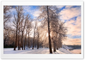 Winter In The Park HD Wide Wallpaper for Widescreen