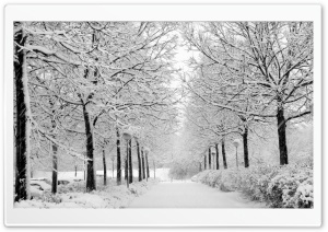 Winter In The Park Black And White HD Wide Wallpaper for Widescreen