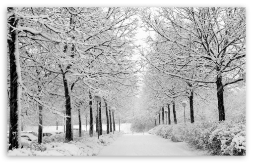 Winter In The Park Black And White HD wallpaper for Wide 16:10 5:3 Widescreen WHXGA WQXGA WUXGA WXGA WGA ; HD 16:9 High Definition WQHD QWXGA 1080p 900p 720p QHD nHD ; Standard 4:3 5:4 3:2 Fullscreen UXGA XGA SVGA QSXGA SXGA DVGA HVGA HQVGA devices ( Apple PowerBook G4 iPhone 4 3G 3GS iPod Touch ) ; Tablet 1:1 ; iPad 1/2/Mini ; Mobile 4:3 5:3 3:2 16:9 5:4 - UXGA XGA SVGA WGA DVGA HVGA HQVGA devices ( Apple PowerBook G4 iPhone 4 3G 3GS iPod Touch ) WQHD QWXGA 1080p 900p 720p QHD nHD QSXGA SXGA ; Dual 16:10 5:3 16:9 4:3 5:4 WHXGA WQXGA WUXGA WXGA WGA WQHD QWXGA 1080p 900p 720p QHD nHD UXGA XGA SVGA QSXGA SXGA ;