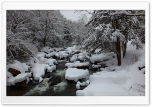 Winter In The Wood HD Wide Wallpaper for Widescreen