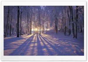 Winter is Coming HD Wide Wallpaper for Widescreen