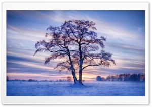 Winter Landscape Ultra HD Wallpaper for 4K UHD Widescreen desktop, tablet & smartphone