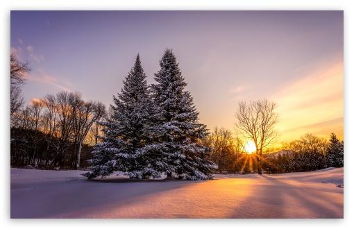 Winter, Landscape, Pine Trees, Orange Sunset UltraHD Wallpaper for Wide 16:10 5:3 Widescreen WHXGA WQXGA WUXGA WXGA WGA ; UltraWide 21:9 24:10 ; 8K UHD TV 16:9 Ultra High Definition 2160p 1440p 1080p 900p 720p ; UHD 16:9 2160p 1440p 1080p 900p 720p ; Standard 4:3 5:4 3:2 Fullscreen UXGA XGA SVGA QSXGA SXGA DVGA HVGA HQVGA ( Apple PowerBook G4 iPhone 4 3G 3GS iPod Touch ) ; Smartphone 3:2 5:3 DVGA HVGA HQVGA ( Apple PowerBook G4 iPhone 4 3G 3GS iPod Touch ) WGA ; Tablet 1:1 ; iPad 1/2/Mini ; Mobile 4:3 5:3 3:2 16:9 5:4 - UXGA XGA SVGA WGA DVGA HVGA HQVGA ( Apple PowerBook G4 iPhone 4 3G 3GS iPod Touch ) 2160p 1440p 1080p 900p 720p QSXGA SXGA ;
