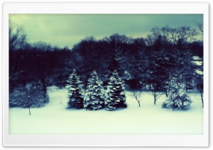 Winter Landscape Three Fir Trees HD Wide Wallpaper for Widescreen