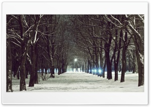 Winter Light HD Wide Wallpaper for Widescreen