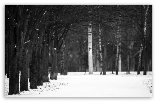 Winter Lights HD wallpaper for Wide 16:10 5:3 Widescreen WHXGA WQXGA WUXGA WXGA WGA ; HD 16:9 High Definition WQHD QWXGA 1080p 900p 720p QHD nHD ; Standard 4:3 5:4 3:2 Fullscreen UXGA XGA SVGA QSXGA SXGA DVGA HVGA HQVGA devices ( Apple PowerBook G4 iPhone 4 3G 3GS iPod Touch ) ; Tablet 1:1 ; iPad 1/2/Mini ; Mobile 4:3 5:3 3:2 16:9 5:4 - UXGA XGA SVGA WGA DVGA HVGA HQVGA devices ( Apple PowerBook G4 iPhone 4 3G 3GS iPod Touch ) WQHD QWXGA 1080p 900p 720p QHD nHD QSXGA SXGA ;