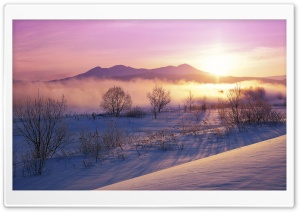 Winter Mist HD Wide Wallpaper for Widescreen