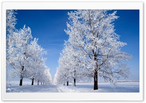Winter Morning HD Wide Wallpaper for Widescreen