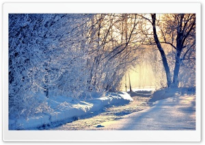 Winter Morning Light HD Wide Wallpaper for Widescreen
