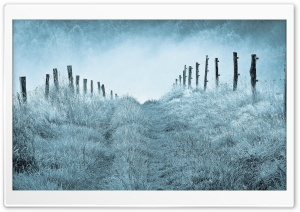 Winter Morning Mist HD Wide Wallpaper for Widescreen