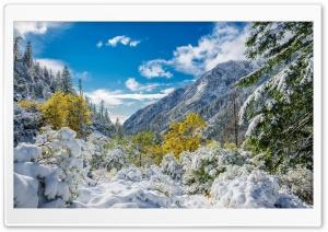Winter Mountains Scenery Fir Ultra HD Wallpaper for 4K UHD Widescreen desktop, tablet & smartphone