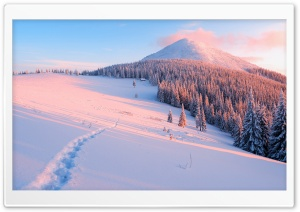 Winter, Nature Ultra HD Wallpaper for 4K UHD Widescreen desktop, tablet & smartphone