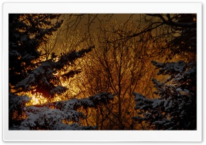 Winter Night Lights HD Wide Wallpaper for Widescreen