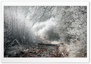 Winter Path HD Wide Wallpaper for Widescreen