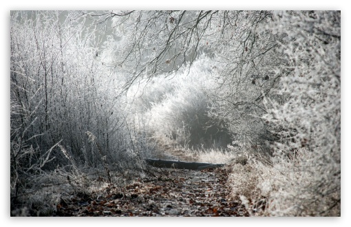 Winter Path HD wallpaper for Wide 16:10 5:3 Widescreen WHXGA WQXGA WUXGA WXGA WGA ; HD 16:9 High Definition WQHD QWXGA 1080p 900p 720p QHD nHD ; Standard 4:3 5:4 3:2 Fullscreen UXGA XGA SVGA QSXGA SXGA DVGA HVGA HQVGA devices ( Apple PowerBook G4 iPhone 4 3G 3GS iPod Touch ) ; Tablet 1:1 ; iPad 1/2/Mini ; Mobile 4:3 5:3 3:2 16:9 5:4 - UXGA XGA SVGA WGA DVGA HVGA HQVGA devices ( Apple PowerBook G4 iPhone 4 3G 3GS iPod Touch ) WQHD QWXGA 1080p 900p 720p QHD nHD QSXGA SXGA ;