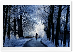 Winter Road Scene HD Wide Wallpaper for Widescreen