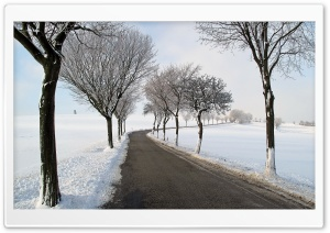 Winter Road Trees HD Wide Wallpaper for Widescreen
